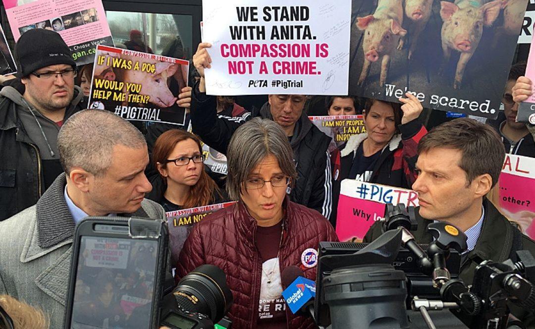 Réaction de l'AJP à la Décision Anita Krajnc